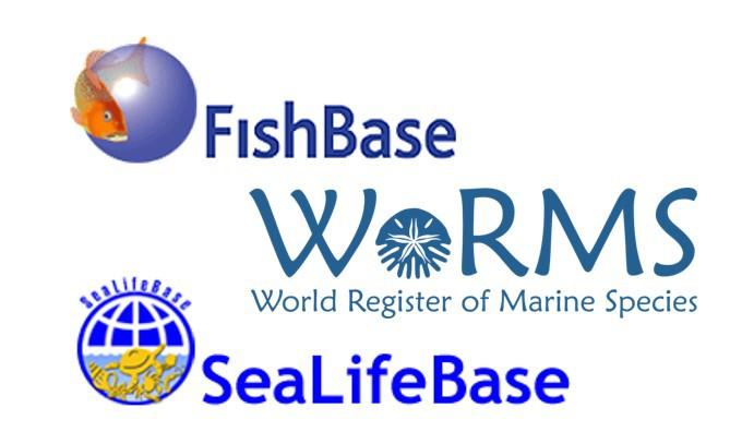 WoRMS, FishBase and SeaLifeBase sign a Memorandum of Understanding